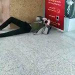 ویدئوهای از پا درآمدن بیماران کرونایی در اماکن عمومی ایران