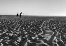 """اعلام آمادگی برای طی """"مسیر پیروزی"""" همراه با شاهزاده رضا پهلوی با پنجاه دلار (50$) در ماه"""