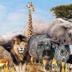 جانور شناسی در اسلام